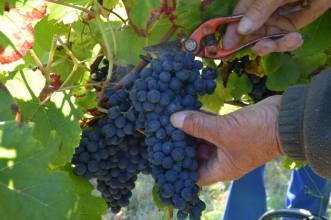 © Syndicat des vins des coteaux du Quercy.