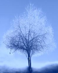 Tilleul dans la brume hivernale © Marie-françoise-Plagès.