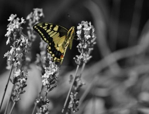 Détail couleur sur photo NB © MF Plagès